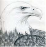 Bald Eagle Pencil Drawing
