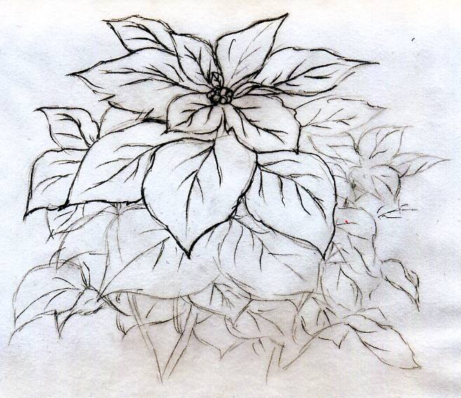 Quick Poinsettia Flower Sketch