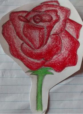drawing of a rose 1