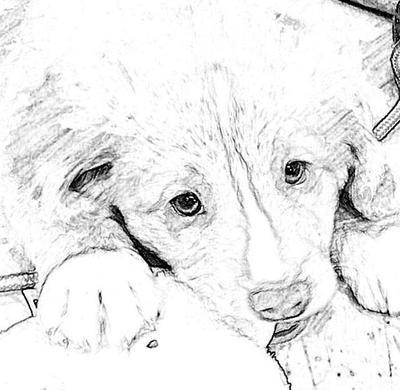 my dog Orry