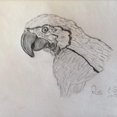 parrot drawing