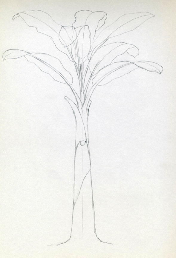 How To Draw Banana Tree