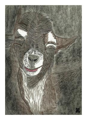 Billy Goat Rough