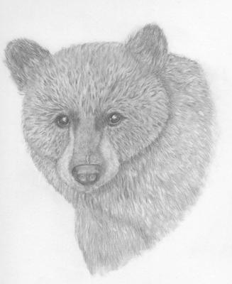 Black bear sketches - photo#22