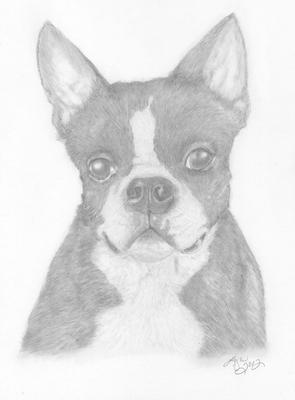 Blackjack - Boston Terrier Easy Mickey Mouse Drawings