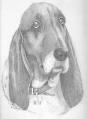 Buddy the Bassett Hound