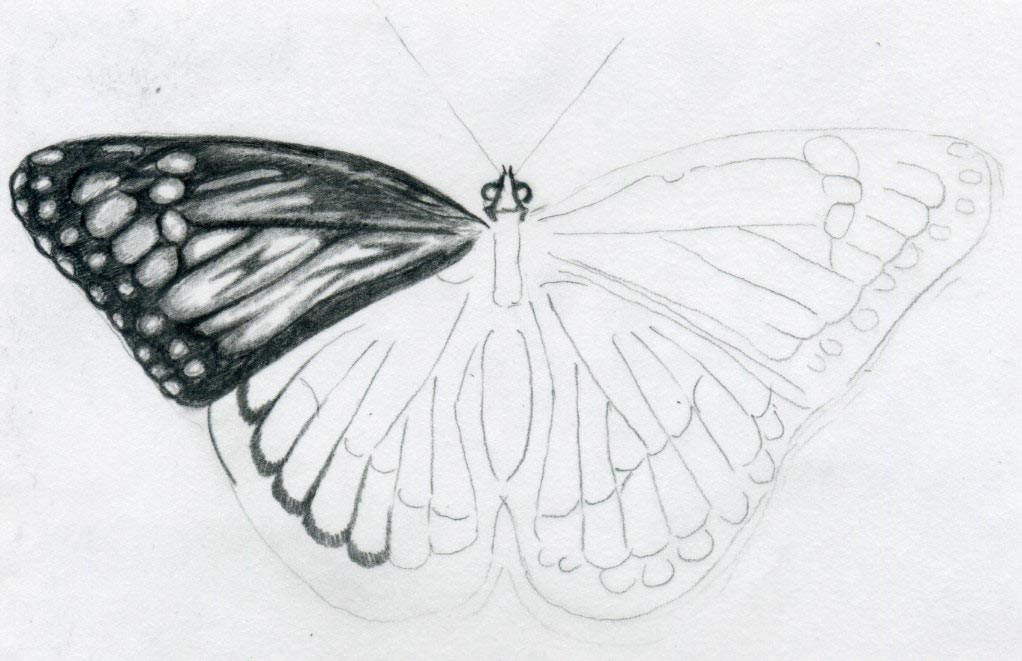 Easy Butterfly Drawings ~ Jus 4 kidz