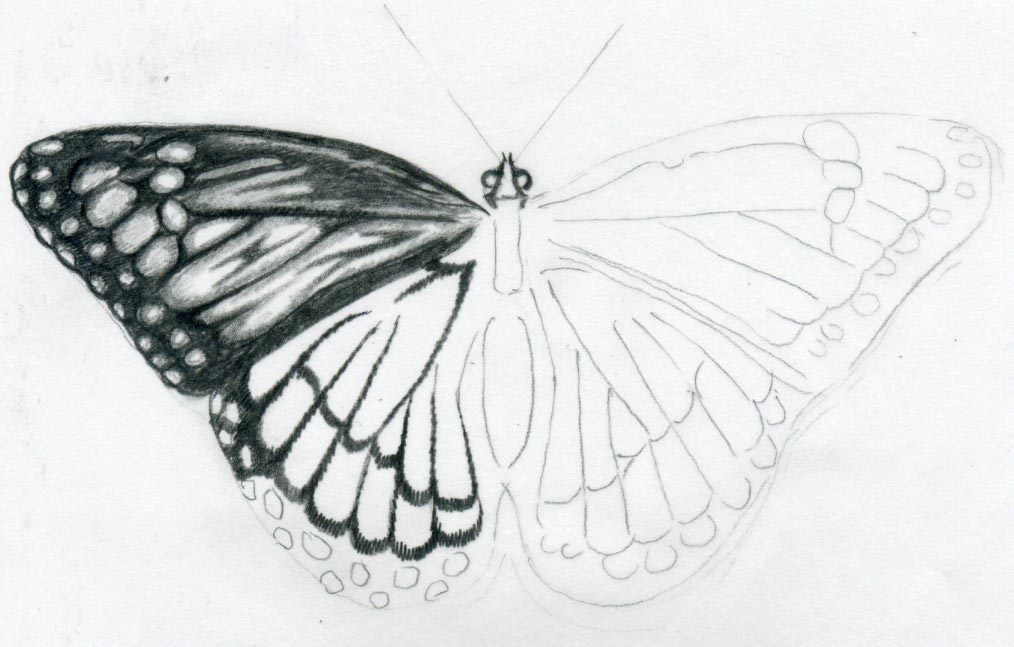 Easy butterfly drawings