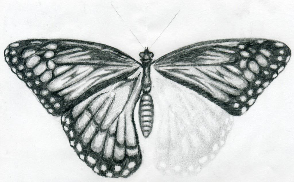 Butterfly drawings for Cool drawings of butterflies