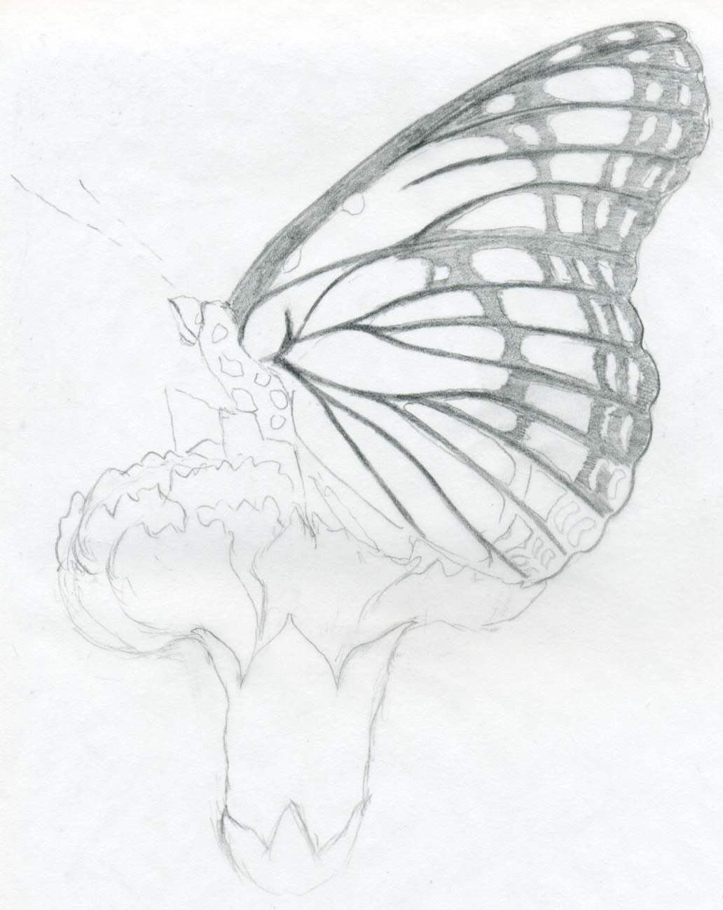 Easy Butterfly Pencil Drawings