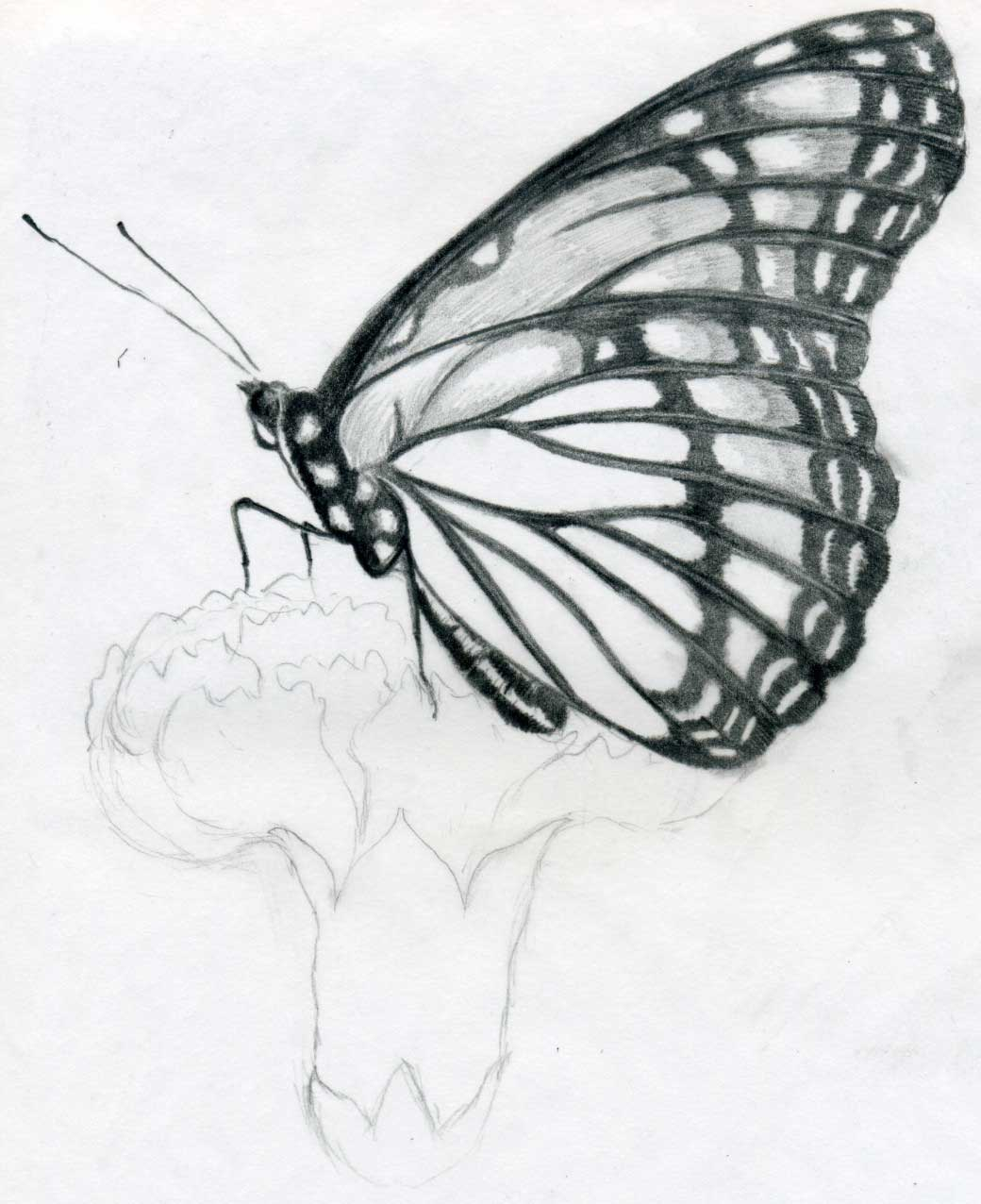 Butterfly Outline Printable