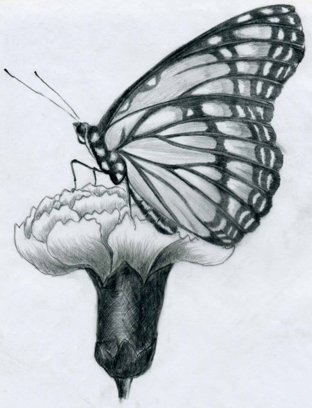 This drawing of a butterfly is taken from a totally different angle ...: www.easy-drawings-and-sketches.com/butterfly-pencil-drawings.html