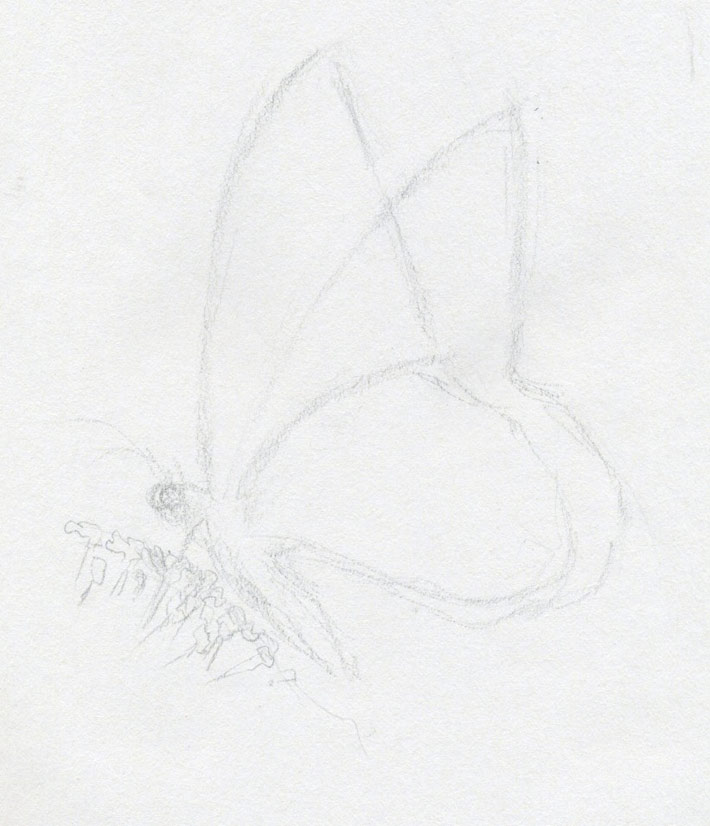Make Butterfly Sketch Quickly And Easily. Speed Is The Key