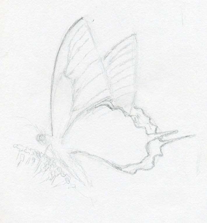 Image of: Pencil Drawing Make Butterfly Sketch Quickly And Easily Speed Is The Key
