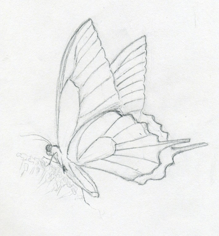 Make Butterfly Sketch Quickly And Easily Speed Is The Key