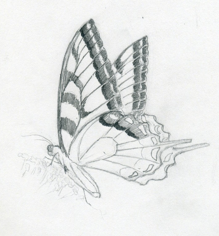 How To Make A Butterfly Sketch