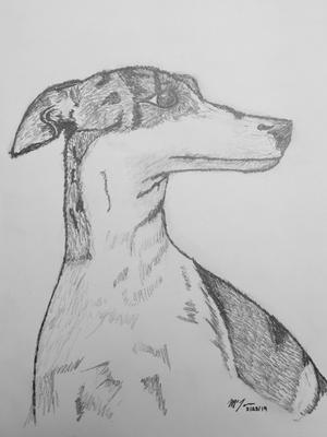 Charlotte the Whippet