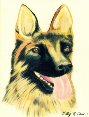 Colored Pencil Drawing Of A German Shepherd