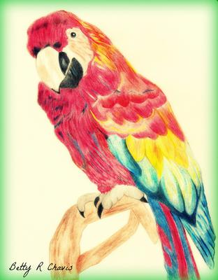 Colored pencil drawing of a parrot