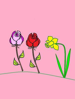 Daffodil and rose
