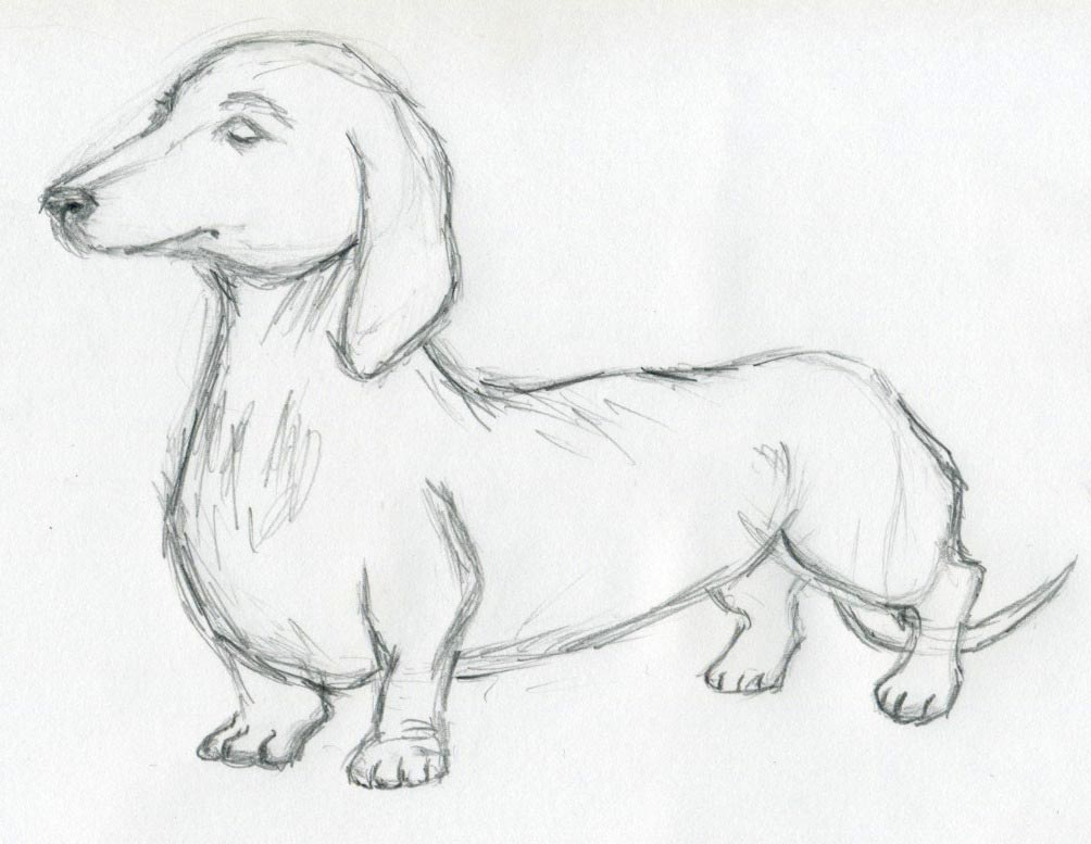 Dog Sketches For Inspi...