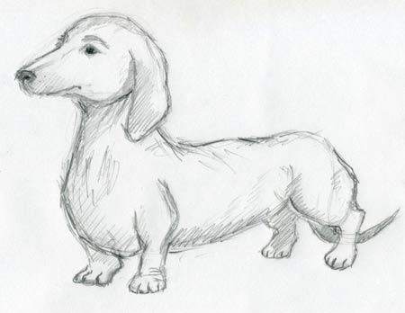Dog Sketches For Inspiration