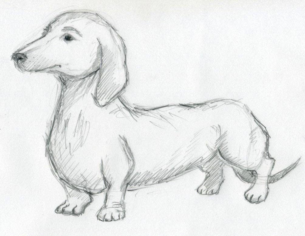 Quick Easy Sketches http://www.easy-drawings-and-sketches.com/dog-sketches.html