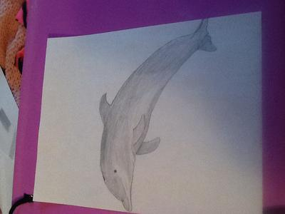 Dolphin (unfinished)