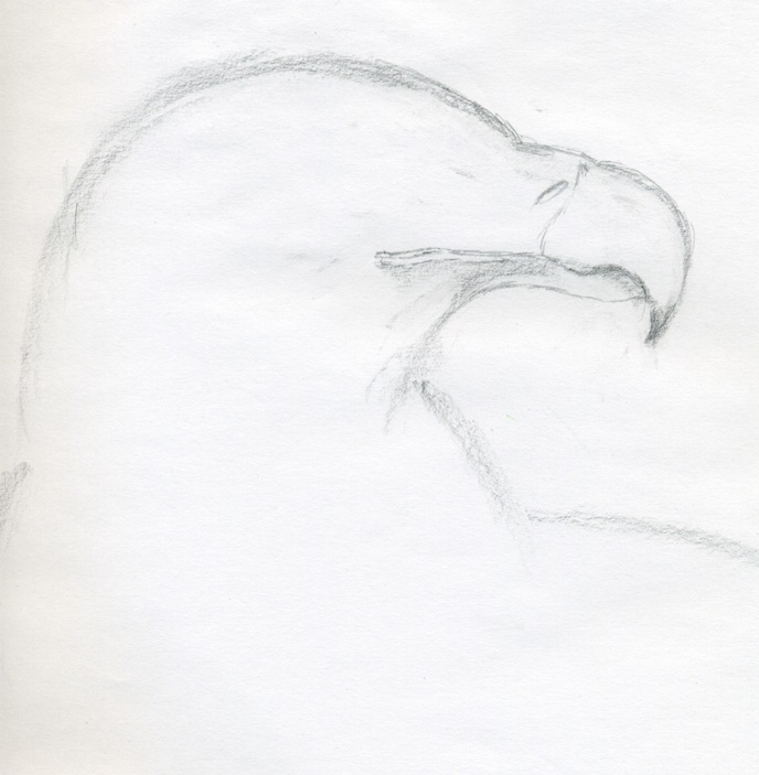 your bald eagle drawings  Eagle Head Pencil Drawing Easy