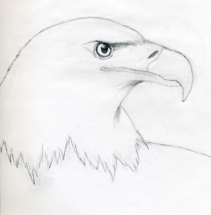 Eagle Eye Pencil Drawing That Shade Extends to The Eye
