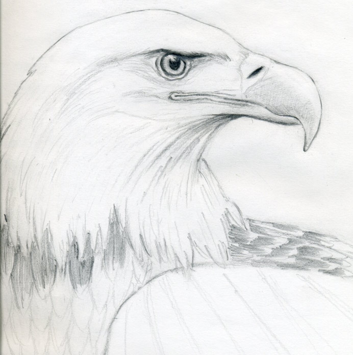 here then you learned how to draw a bald eagle the rest is just ...