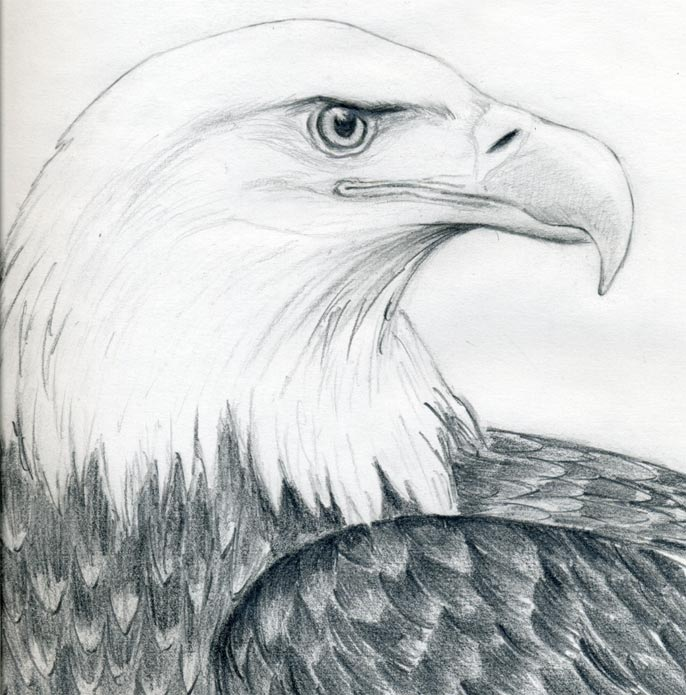 by simple pencil strokes  Eagle Head Pencil Drawing Easy