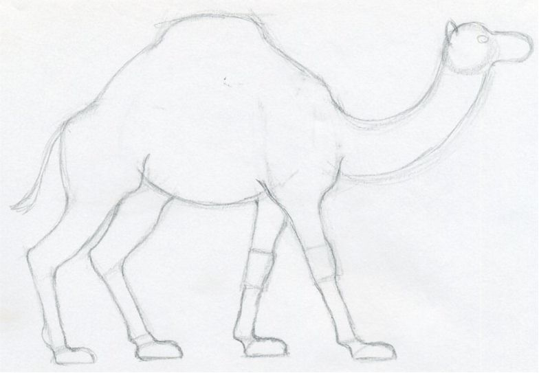 How To Draw A Camel, simple, quick in color pencil