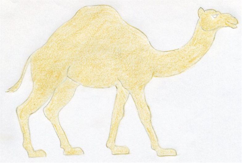 how to draw a easy camel