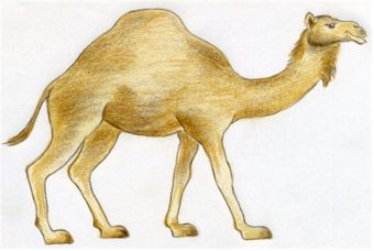 How to Draw Camel