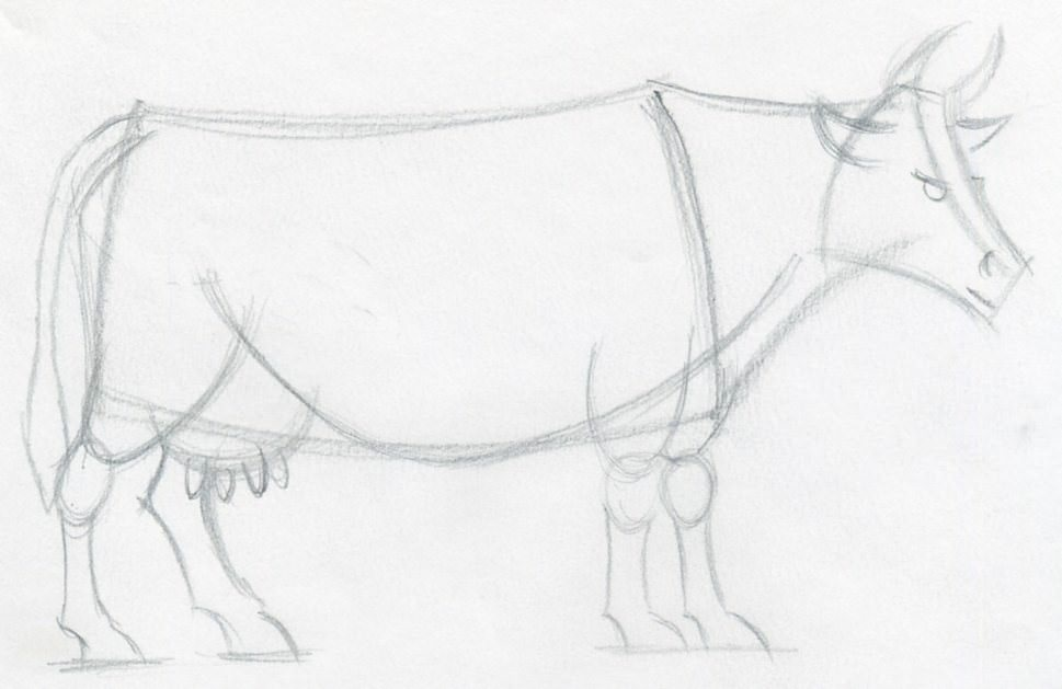 Line Drawing Cow Face : How to draw a cow step by