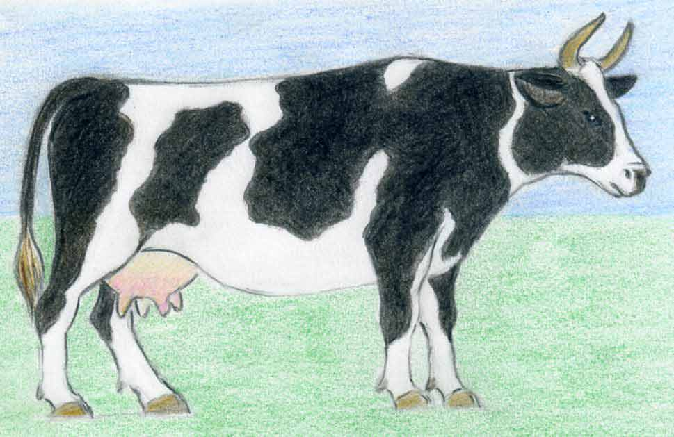 How To Draw A Cow easy way