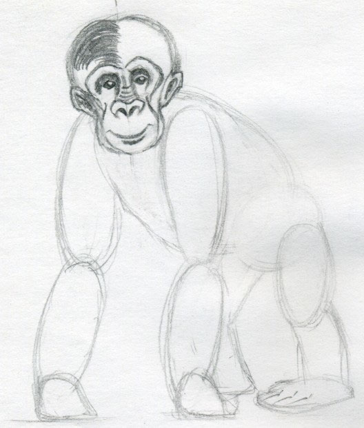 Simple Realistic Monkey Drawing