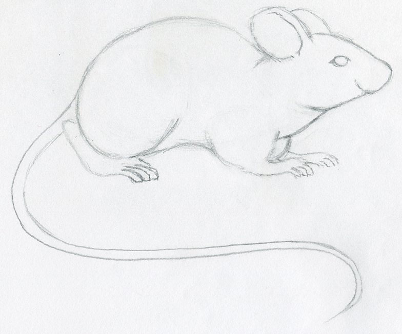 Line Drawing Rat : How to draw a mouse