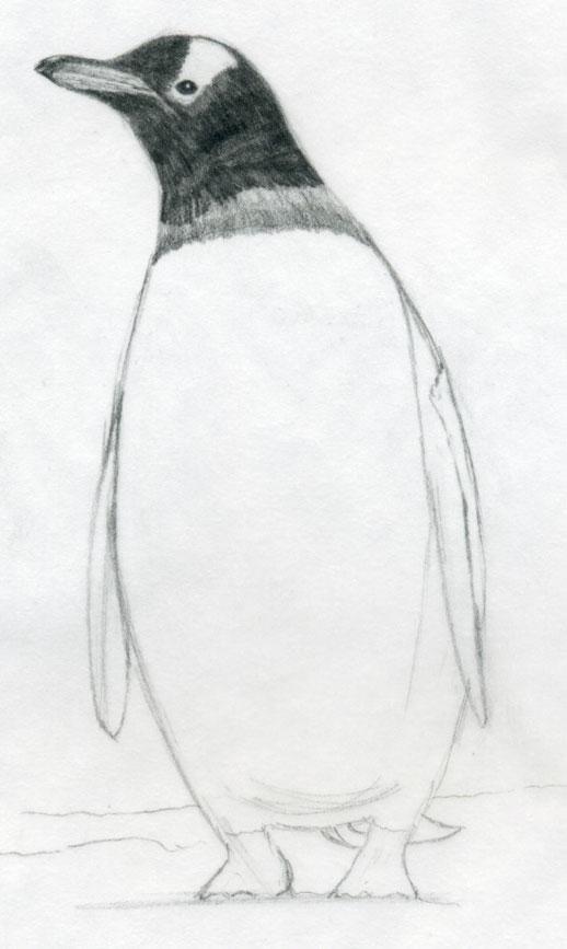 Penguins drawing - photo#17