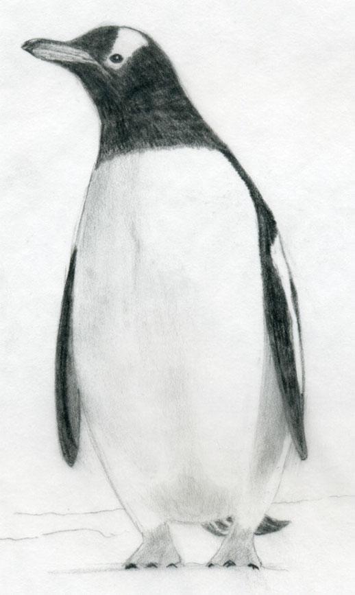 Penguins drawing - photo#33