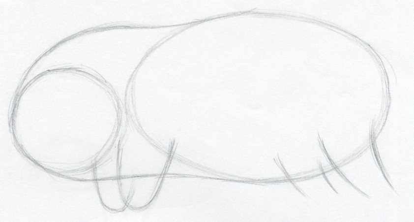 How To Draw A Pig | 842 x 451 jpeg 27kB
