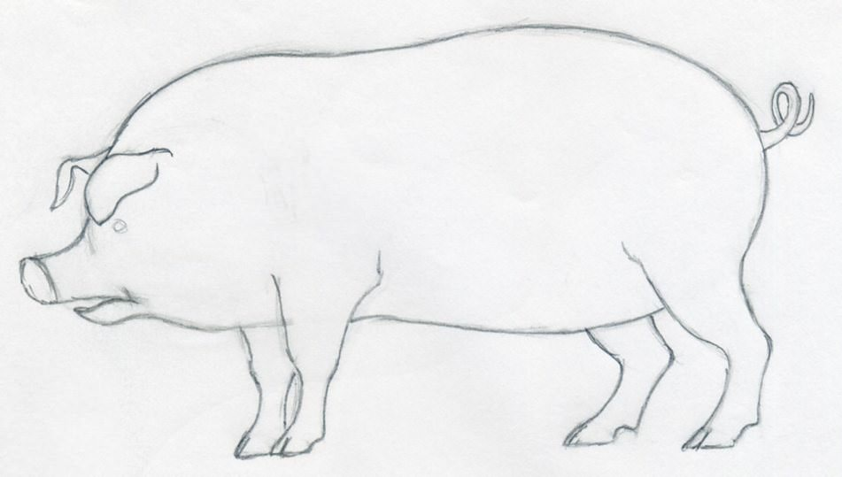 Simple Line Drawing Pig : How to draw a pig