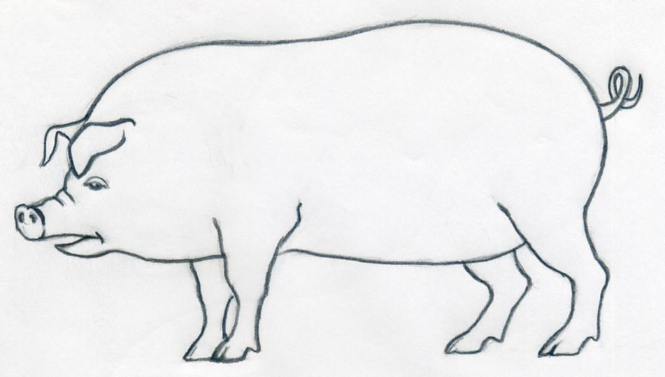 lets learn how to draw a pig click the image to enlarge