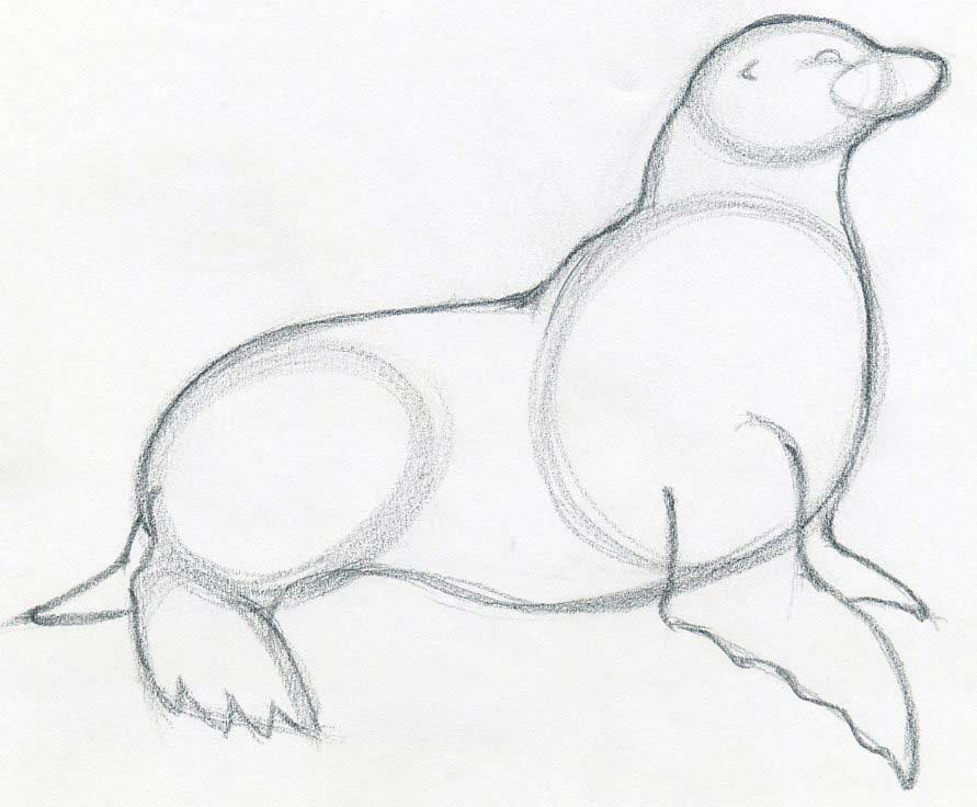 how to draw a cartoon seal step by step easy