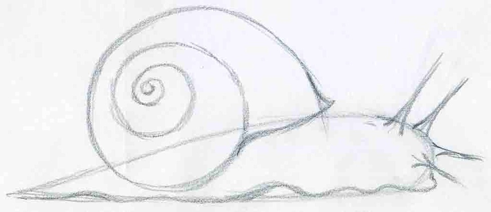 how to draw a snail easy