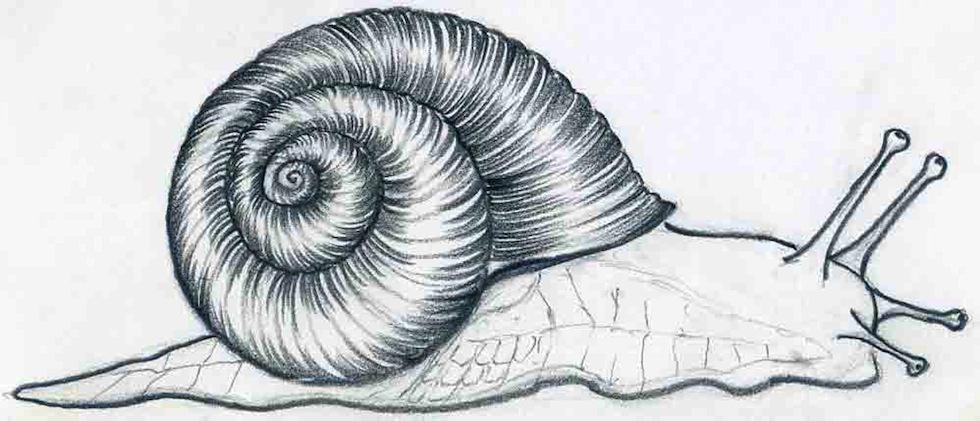 Snail sketch the image kid has it for How do you draw a snail
