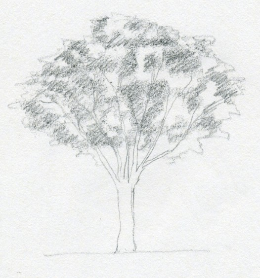 Easy Pencil Sketches Of Trees
