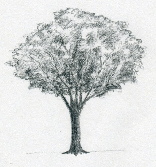 by irregular still weak pencil strokes draw the leaves it will look like a bundle of shades but it is ok