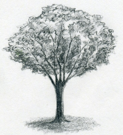 How to Draw a Realistic Tree Drawing